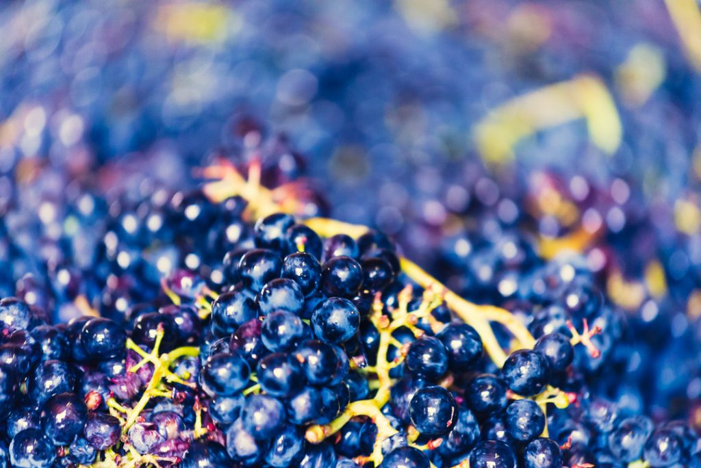 Weinfotos, Fotos von Winzern, Weingärten und Lagen